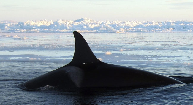 Norway caught Japan in whaling